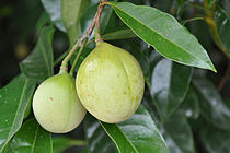 Nutmeg fruits