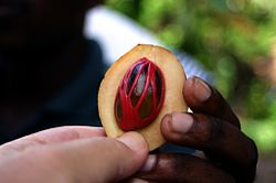 Nutmeg fruit inside